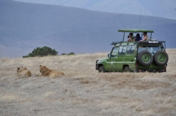 bushtreksafaris_ngorongoro_13